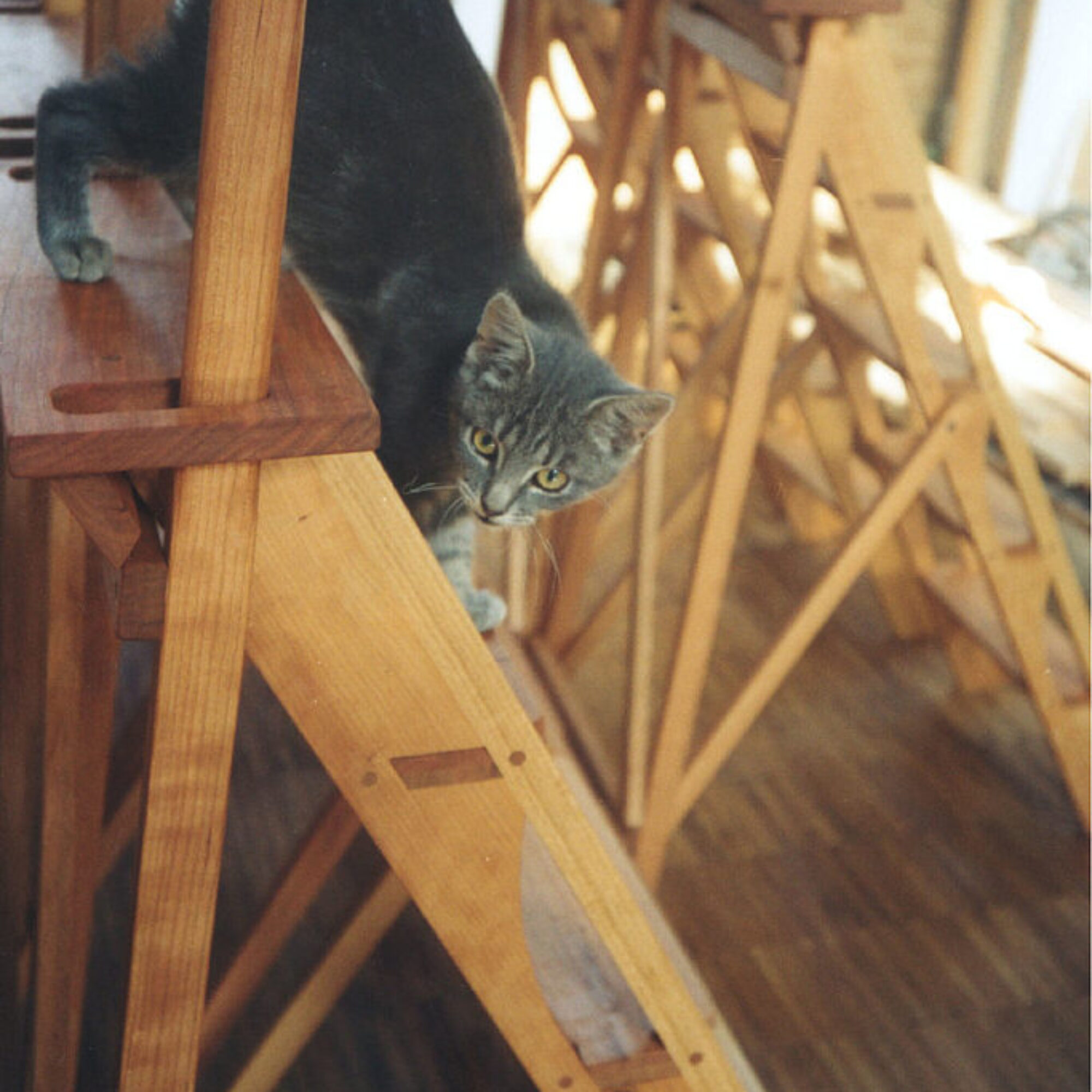 Cat on ladder